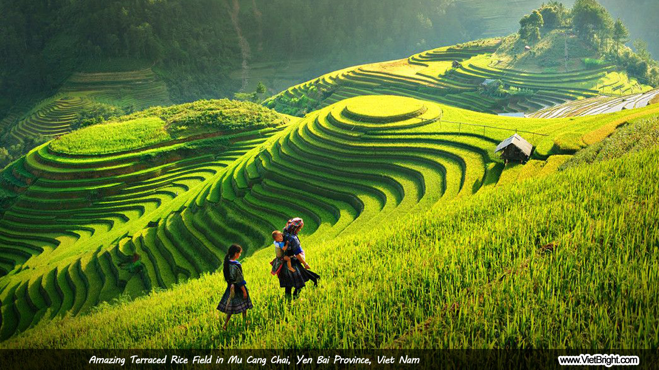Amazing terraced rice field in Mu Cang Chai, Yen Bai, Vietnam | www.VietBright.com