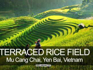Amazing terraced rice field in Mu Cang Chai, Yen Bai, Vietnam | www.VietBright.com